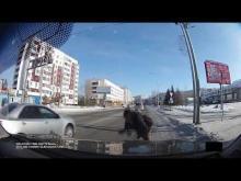 Embedded thumbnail for Пьяный пешеход переходит дорогу